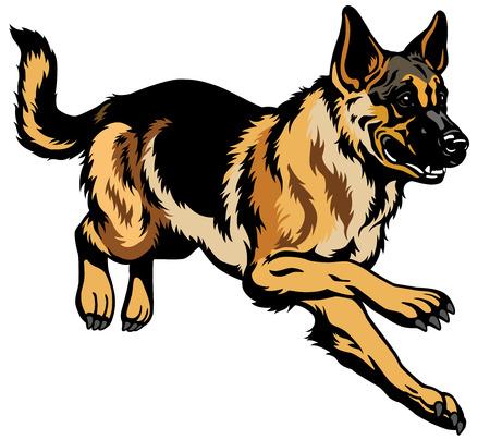 pastorcillo: Ilustración perro de raza pastor alemán aisladas sobre fondo blanco