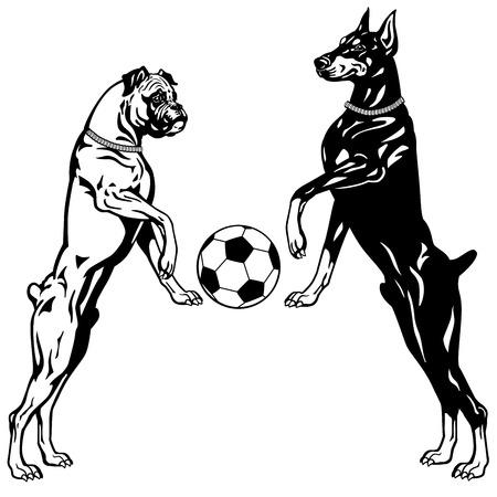agility:  dogs doberman and boxer breeds, black and white illustration