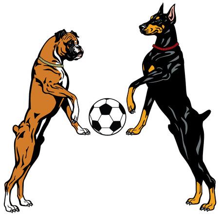 doberman: Hunde Dobermann und Boxer, Fische, Illustration isoliert auf wei�em Hintergrund