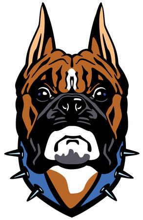 perro boxer: cabeza de perro boxer, vista frontal ilustración aislado sobre fondo blanco