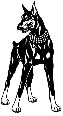 pinscher: dog doberman pinscher breed, black and white illustration