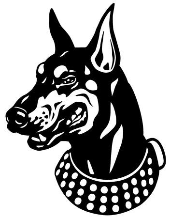 pinscher: dog head,doberman pinscher breed,black and white illustration  Illustration