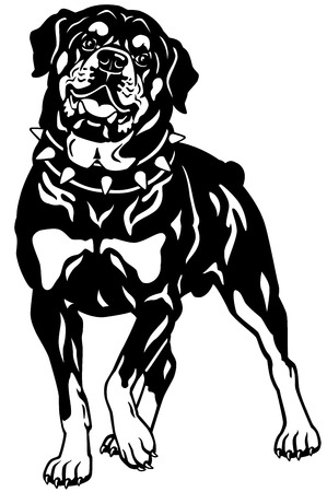 dog rottweiler breed,front view, black and white illustration