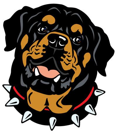 dog head: dog head, rottweiler breed,illustration isolated on white background Illustration
