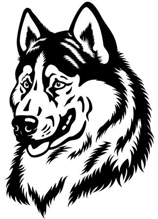 attentive: dog head, siberian husky breed, black and white illustration