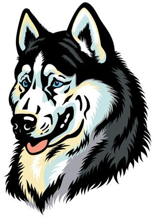 �siberian husky�: dog head, siberian husky breed illustration isolated on white Illustration