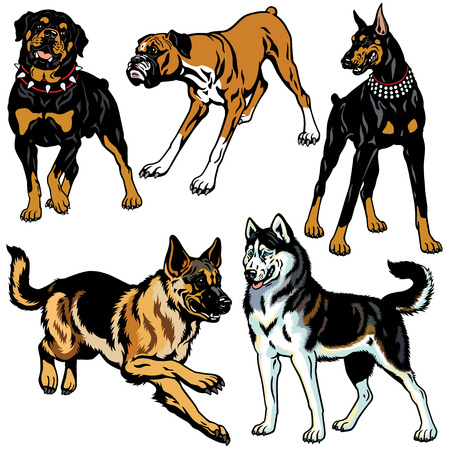 set with dog breeds, pictures isolated on white  イラスト・ベクター素材