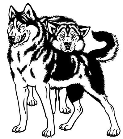 dog sled: siberian husky sled dogs black and white illustration