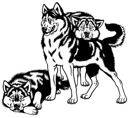 sled dogs: siberian husky sled dogs black and white illustration