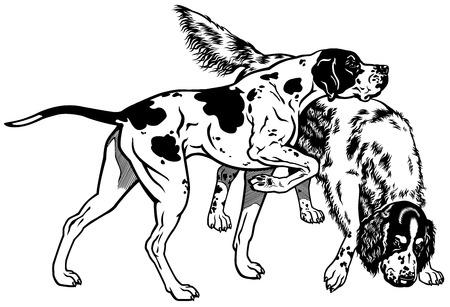 setter: english pointer and setter gun dog breeds, black and white illustration  Illustration