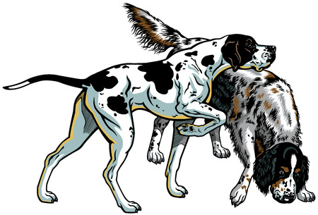 gun dog: english pointer and setter gun dog breeds, illustration isolated on white background