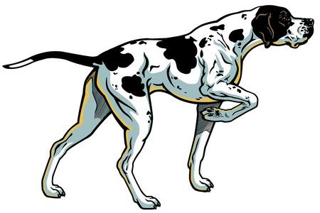 Inglés puntero raza perro de caza, la vista lateral, ilustración aisladas sobre fondo blanco