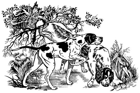 hunting dogs in forest,english pointer and setter breeds,black and white illustration