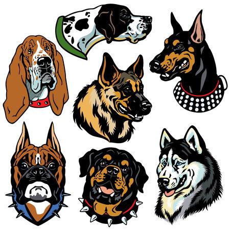 doberman: Set mit Hunden K�pfe icons Unterschied Rassen Isoliert auf wei�em Hintergrund Illustration