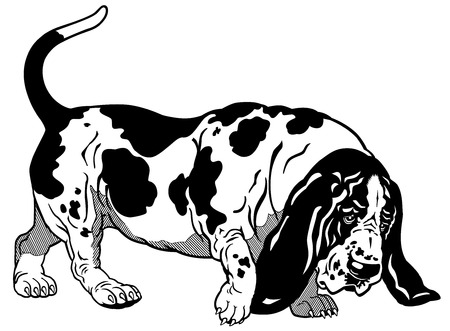 basset hound: dog basset hound breed, black and white illustration