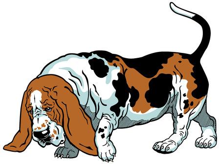 basset: dog basset hound breed,illustration isolated on white background