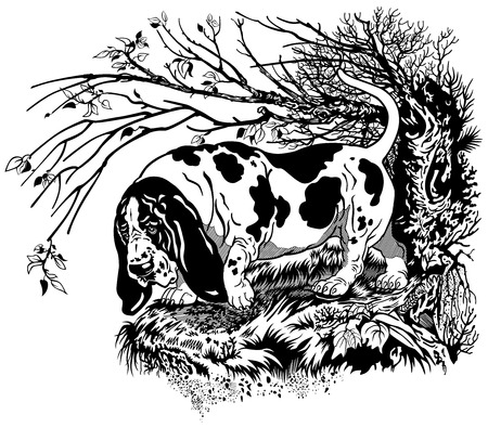 basset hound: hunting dog in forest,basset hound breed, black and white graphic style illustration  Illustration