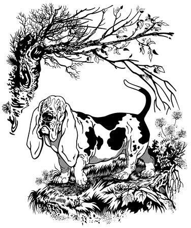 basset hound: hunting dog in forest,basset hound breed, black and white graphic style illustration
