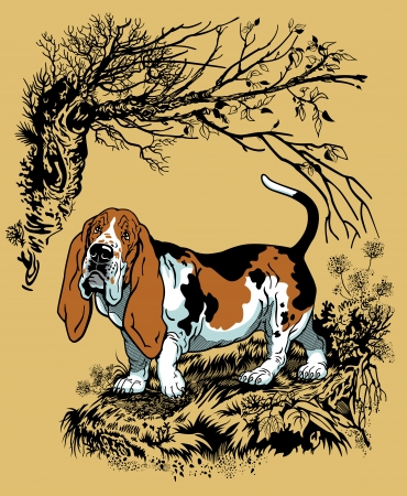 basset hound: hunting dog in forest, basset hound breed, graphic style illustration