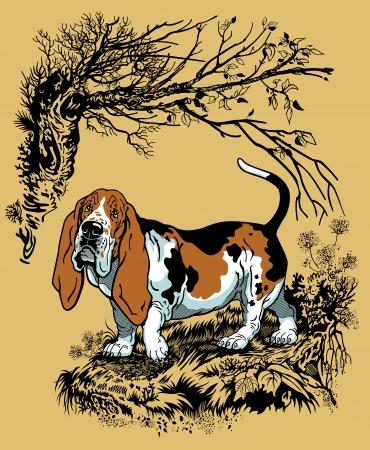 basset hound: perro de caza en el bosque, de la raza del perro de afloramiento, ilustraci�n estilo gr�fico