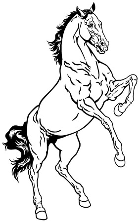mustang horses: horse, rearing mustang,black and white illustration