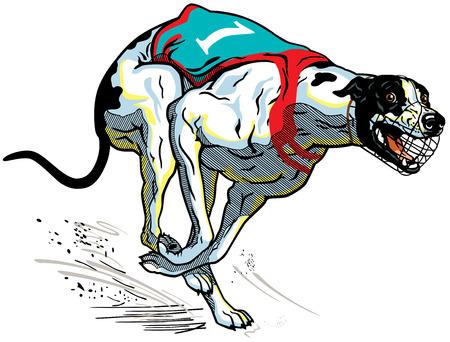 greyhound: running racing dog, english greyhound breed, illustration isolated on white