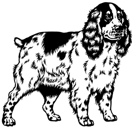 cocker: dog english cocker spaniel breed,black and white illustration