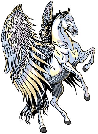 white pegasus, mythological winged horse, illustration isolated on white background