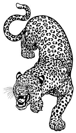 leopard: leopardus black and white tattoo illustration  Illustration