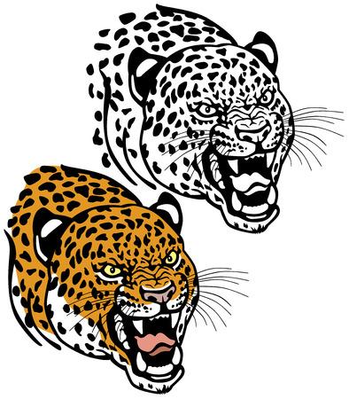 panthera: testa di leopardo isolato su sfondo bianco