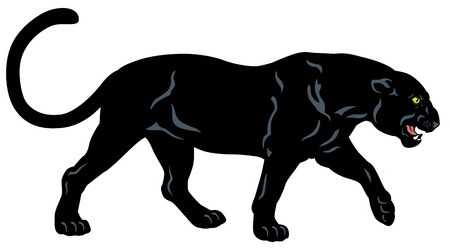 carnivores: black panther, side view image isolated on white background
