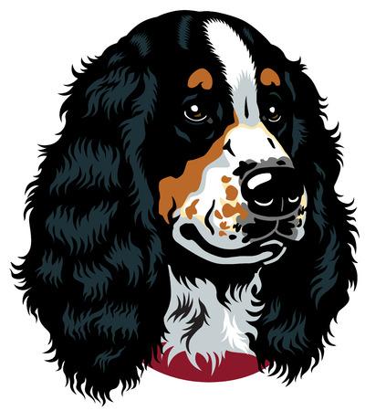 breeds: dog head, english cocker spaniel breed, image isolated on white background  Illustration