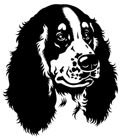 hunting dog: dog head, english cocker spaniel breed, black and white image