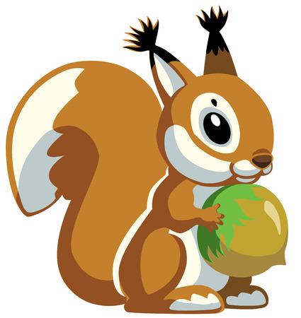 squirrel holding nut, cartoon image isolated on white  Illustration