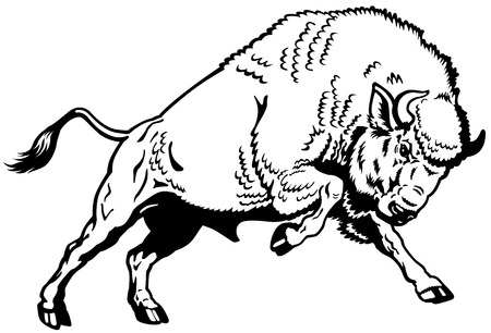 hoofed mammal: wisent european bison,attacking pose, black and white side view image  Illustration