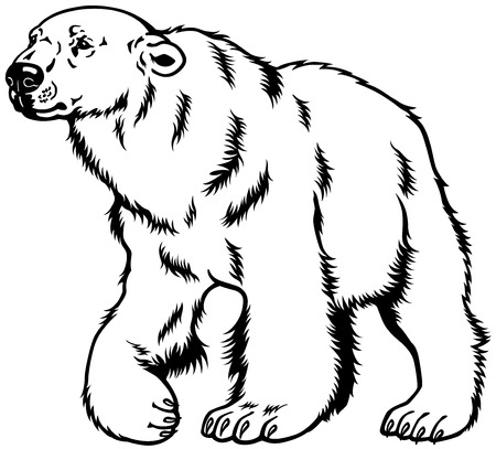 beast creature: polar bear black and white image  Illustration