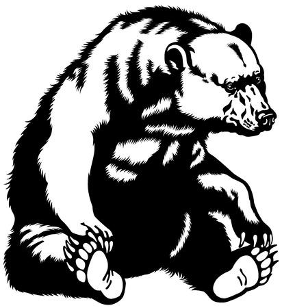 회색 곰, 앉아 포즈, 흑백 이미지 일러스트