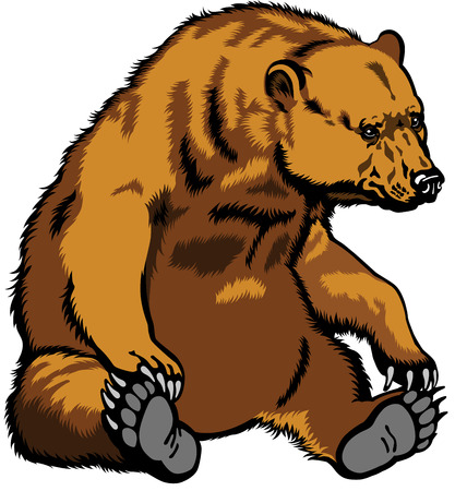 grizzly bear, sitting pose, image isolated on white  Vector