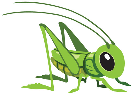 cartoon grasshopper for little kids, image isolated on white Ilustração