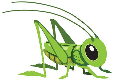 cartoon grasshopper for little kids, image isolated on white Vettoriali