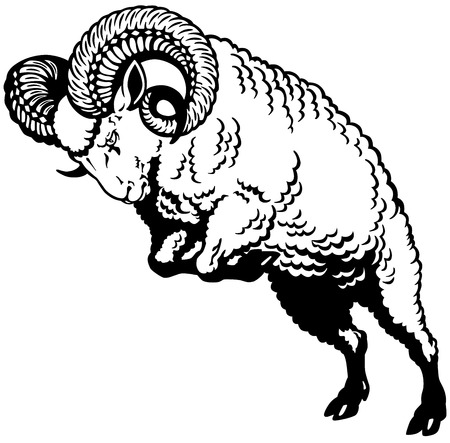 ram sheep attacking pose, black and white image Vector