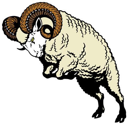 aries: ram atacante ovejas pose, imagen aislada en blanco