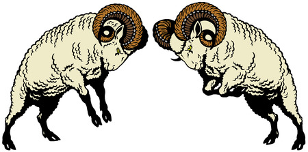 two rams sheep fighting, image isolated on white Vector