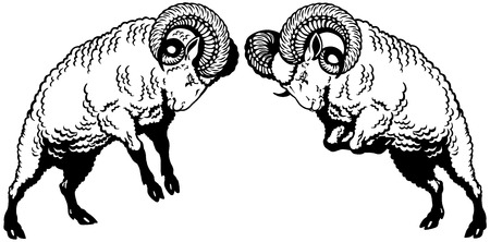 two rams sheep fighting, black and white image Vector