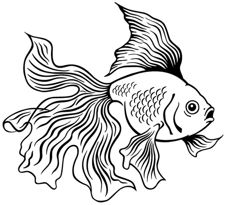goldfish or golden fish, black and white side view outline image