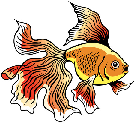 goldfish or golden fish, side view image isolated on white Vector
