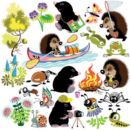 establecer con mole y el erizo explorar el mundo de los insectos, imágenes aisladas de dibujos animados para niños pequeños