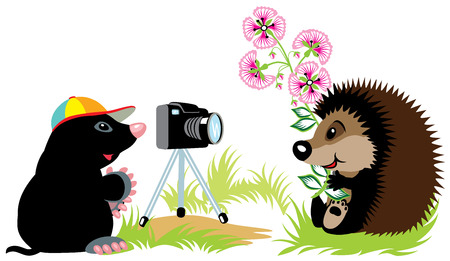 wildlife shooting: cartoon mole photographer taking photo of hedgehog,isolated image for little kids