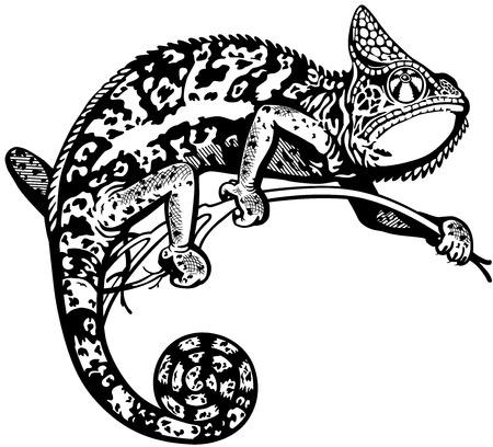 chameleon lizard: camaleonte lucertola, in bianco e nero vista laterale immagine isolato