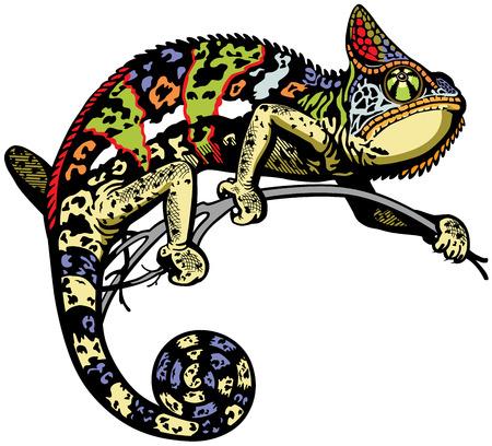 chameleon lizard: camaleonte lucertola vista laterale immagine isolato